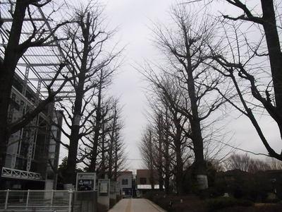 曇りゾラ2.JPGのサムネール画像