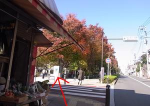駅からの道のり12.JPG
