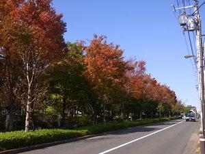 駅からの道のり19.JPG